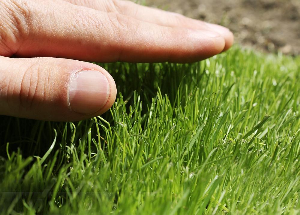5 Tipps Für Einen Schönen Rasen Birchmeier Sprühtechnik Ag