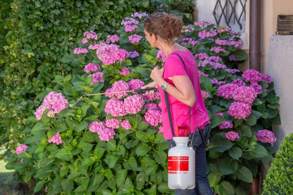 Hortensien Pflanzen Und Pflegen Birchmeier Sprühtechnik Ag