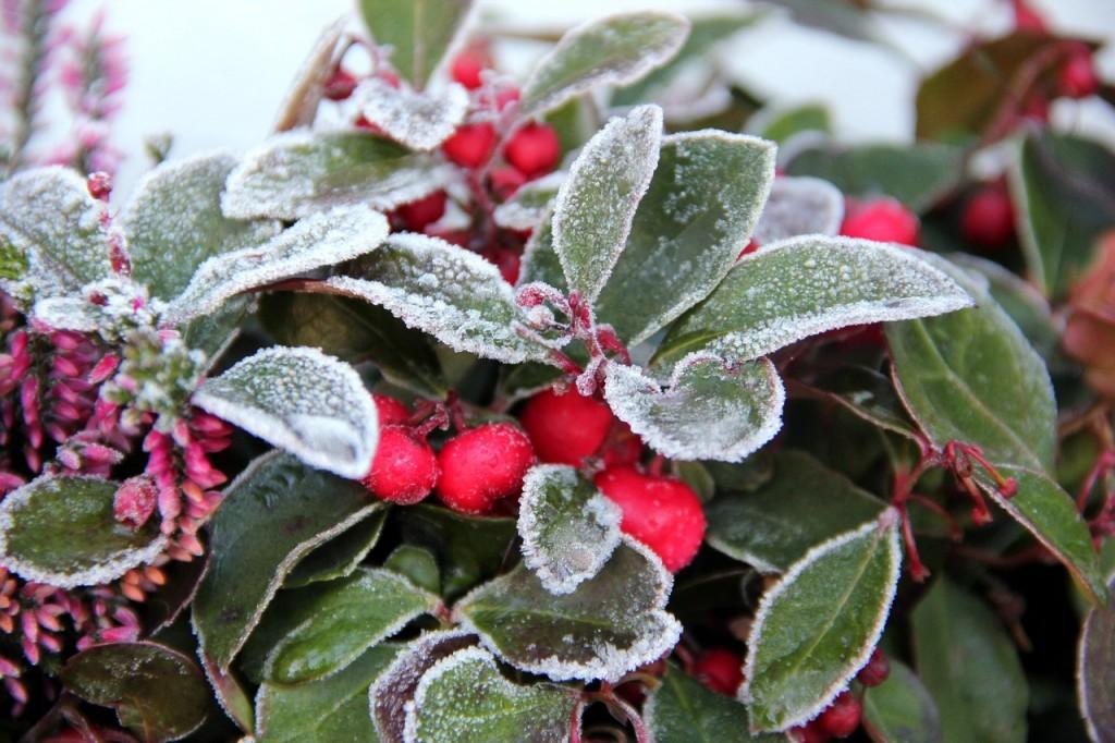 Pflanzen f�r den Winterbalkon